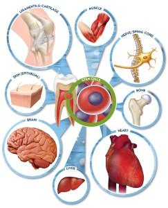 Dental Pulp Stem Cells into muscle, nerve/spinal cord, bone, heart, liver, brain, skin (epithelial), ligaments & cartilage
